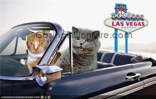 Funny cats in Vegas