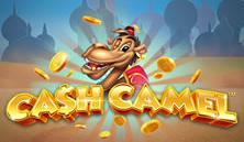 Cash Camel Slots game iSoftBet