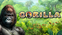 Play Gorilla slot game Novomatic