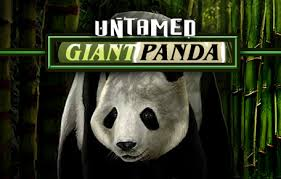 Play Untamed Giant Panda Slots game Microgaming