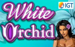 White Orchid Slots game IGT